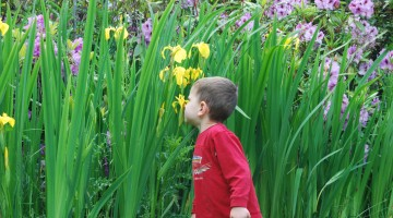 Young boy sniffing a daffodil.